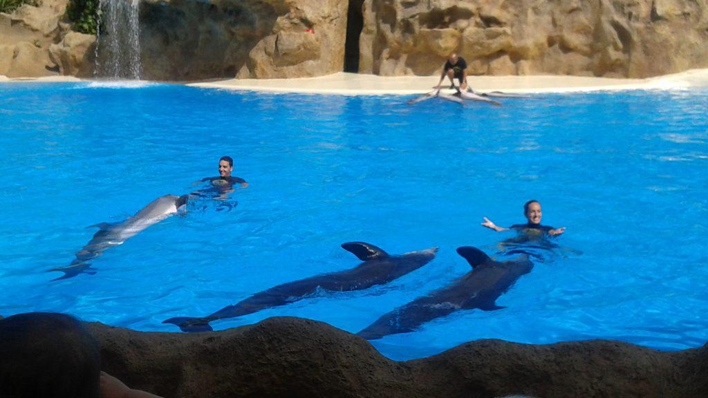 Loro park delfini