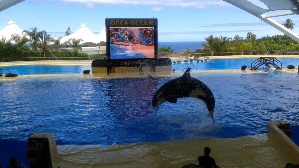 Tenerife-Loro-Parque-orcas