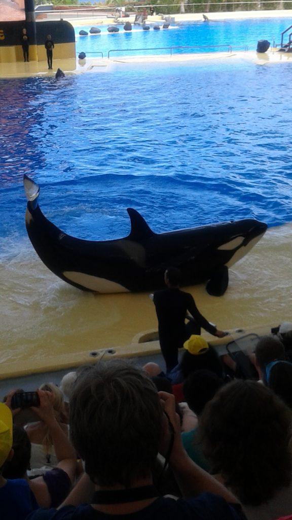 Loro park orca