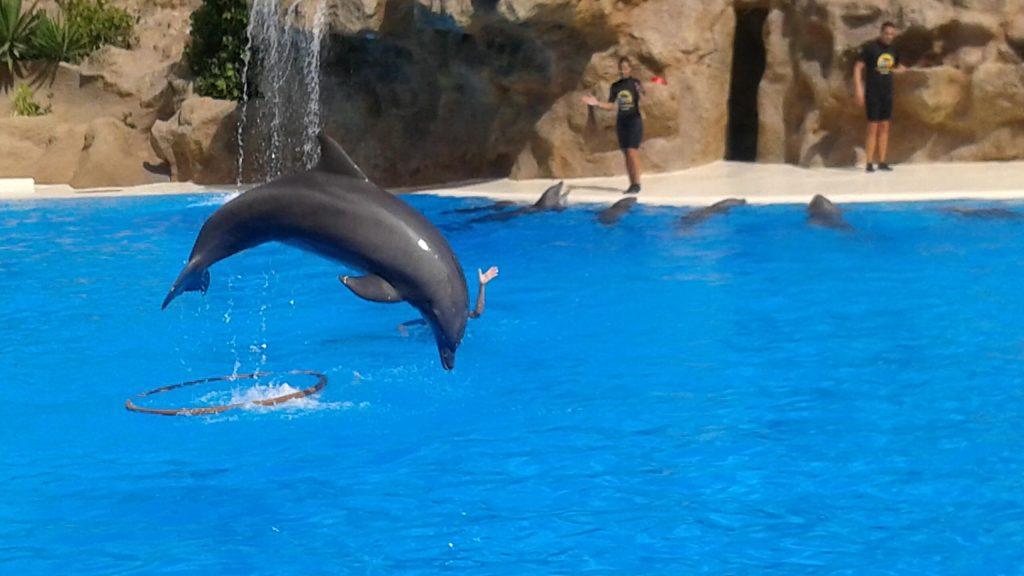 tenerife-loro-park-delfini