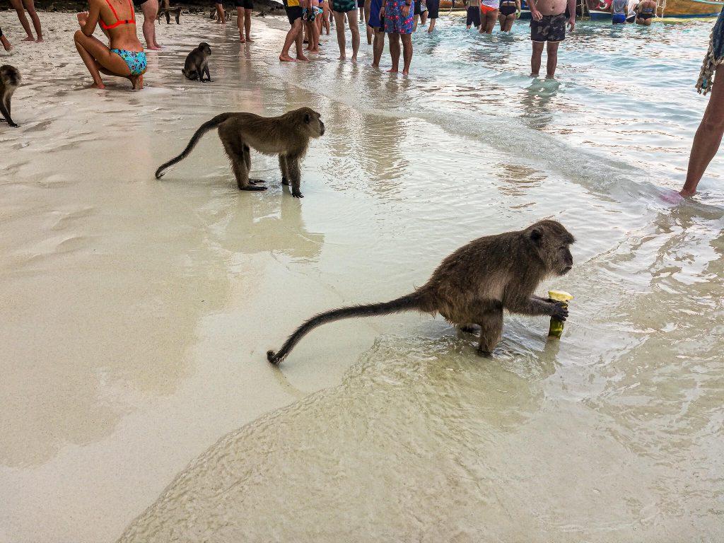 monkey-beach