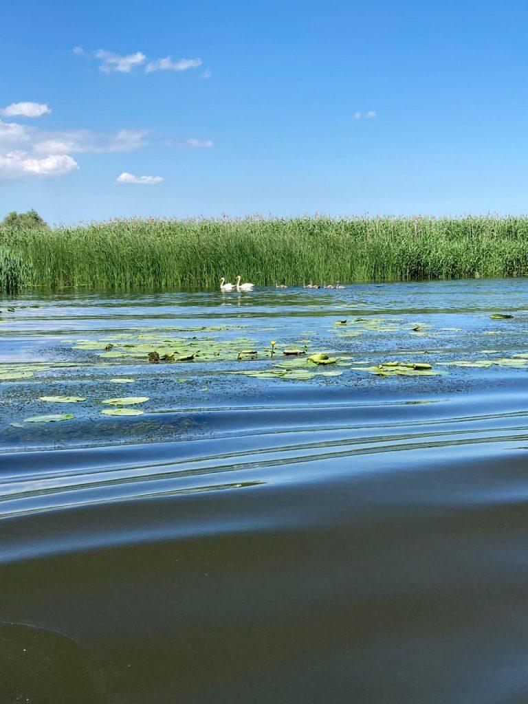 delta-dunarii-flora