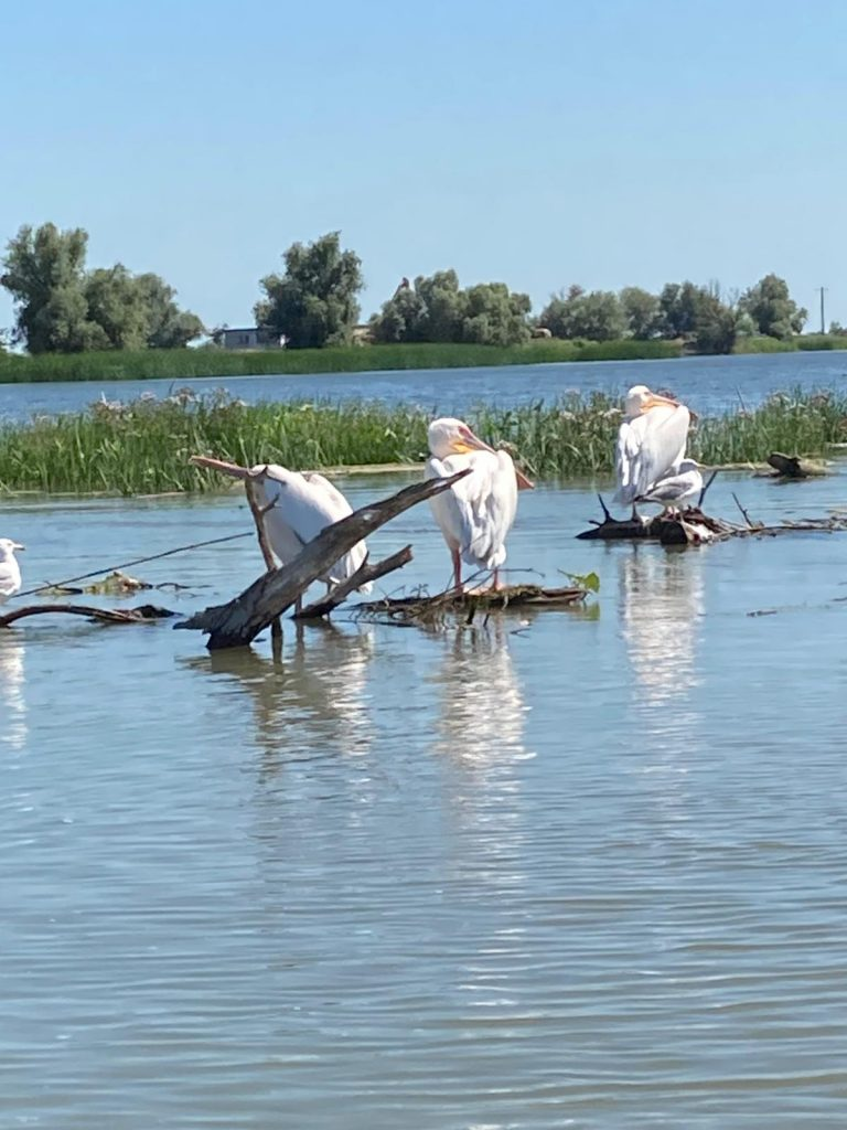 delta-dunarii-pelicani