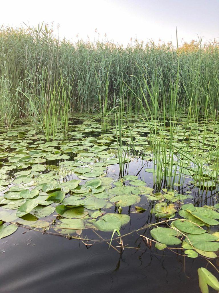 vegetatie-in-delta-dunarii