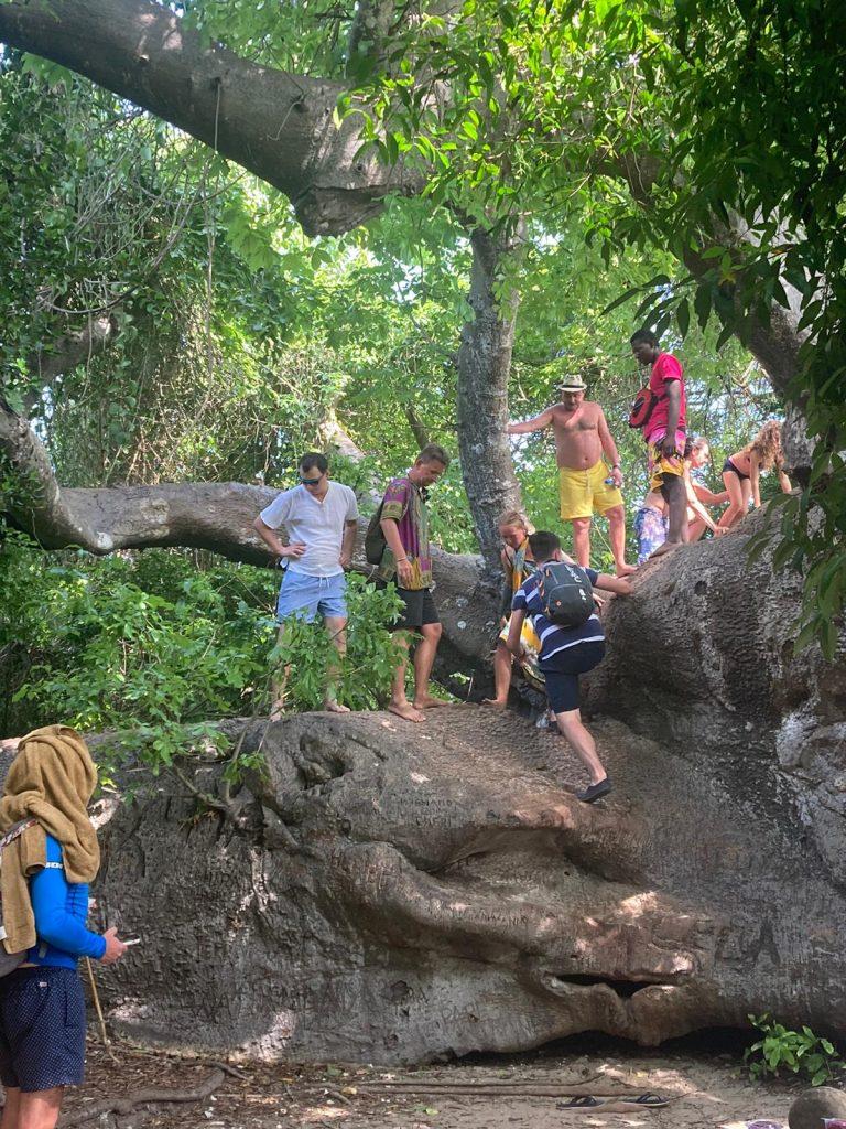 safari blue zanzibar baobab