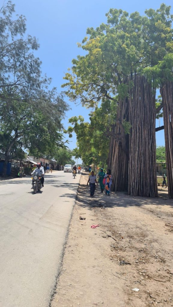 zanzibar roads